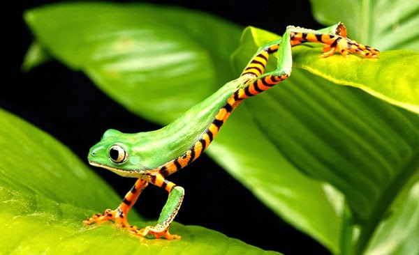 green nature animals leaves wildlife frogs hdr photography amphibian bird 1920×1173 wallpaper_www.wallpaperto.com_60