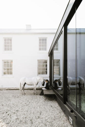Symmons Plains interaction with horse in courtyard